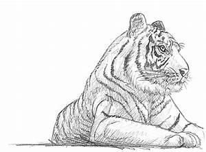 Zeichnen Lernen Mit Bleistift : einen tiger zeichnen lernen ~ Frokenaadalensverden.com Haus und Dekorationen
