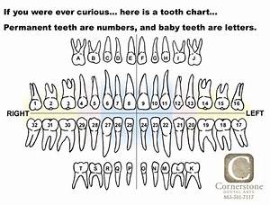 Baby Tooth Chart Letters