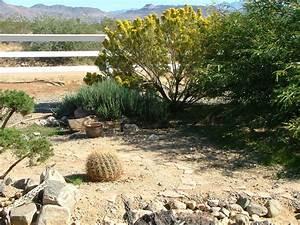 Desert Plants Names List