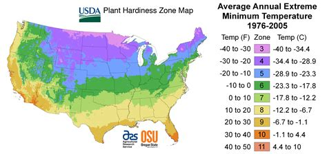 gardening zones map of us growing pictures to pin on pinterest pinsdaddy