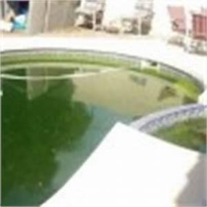 traitement de l39eau archives With pourquoi l eau de la piscine est verte 0 des algues filamenteuses dans ma piscine