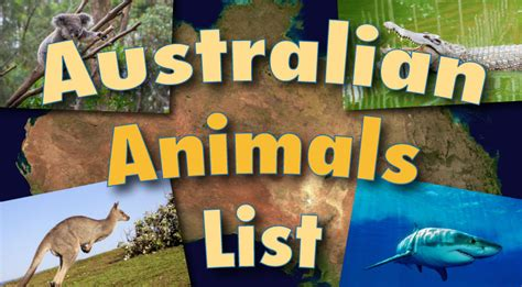 australian animals list  pictures facts information