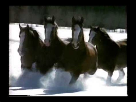 budweiser beer clydesdale horse commercial youtube