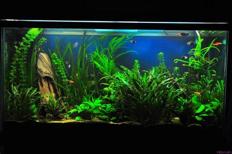 freshwater fish tank freshwater tropical fish tank pictures just for 2017 fish tank