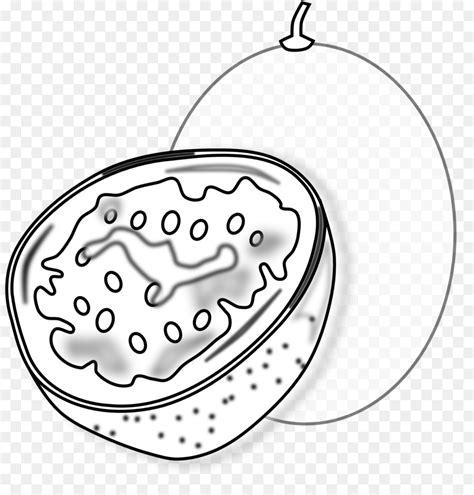 mewarnai gambar buah markisa