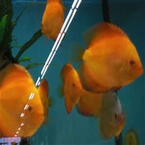 Tiere Für Aquarium : ausgaben und aufwand f r ein aquarium f r kinder im ~ Lizthompson.info Haus und Dekorationen