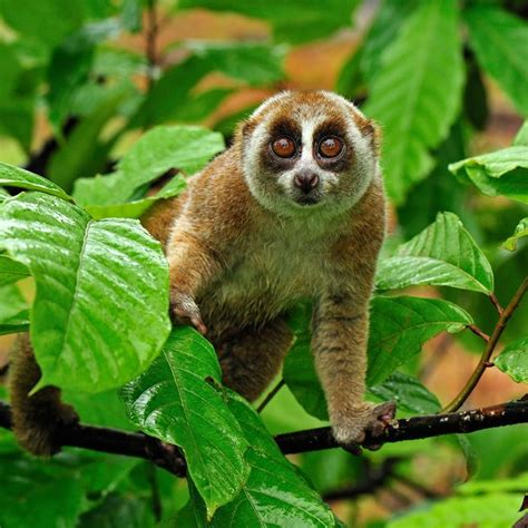 The Slow Loris Is You at Happy Hour -- Science of Us