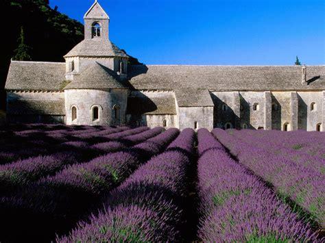 lavender field  provence france world  travel