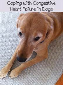 Dog Congestive Heart Failure Treatment