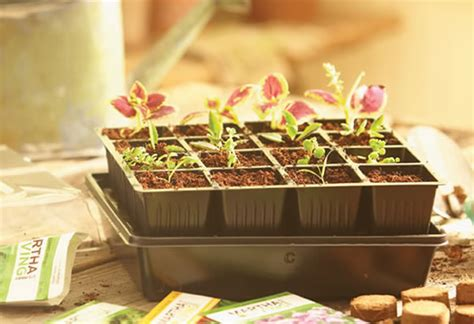 start seeds at home with a seed starter kit garden club