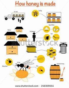 Honey-producer Stock Photos, Images, & Pictures | Shutterstock
