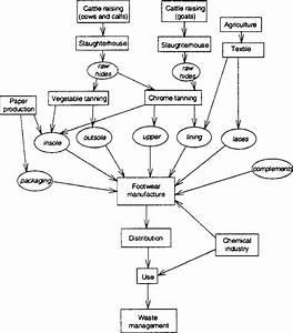 Life Cycle Process Tree Of Footwear