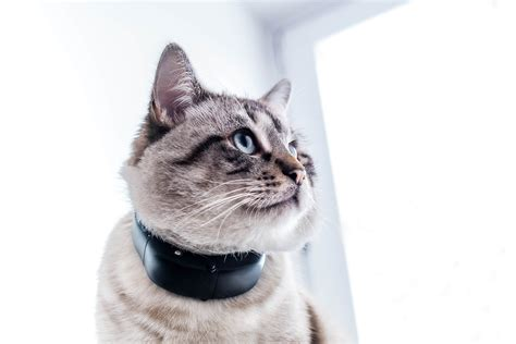 press release tractive gps dog  gps cat announced