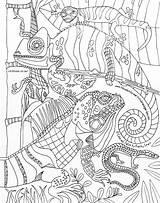 Coloring Lounge Visitar Lizards Kathy Sturr Drawn Artist sketch template