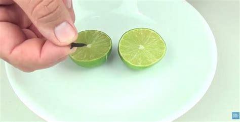 anti moustiques enfoncez des clous de girofle dans le citron coup 233