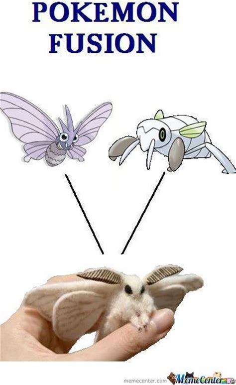 Moth Meme - poodle moth memes best collection of funny poodle moth pictures