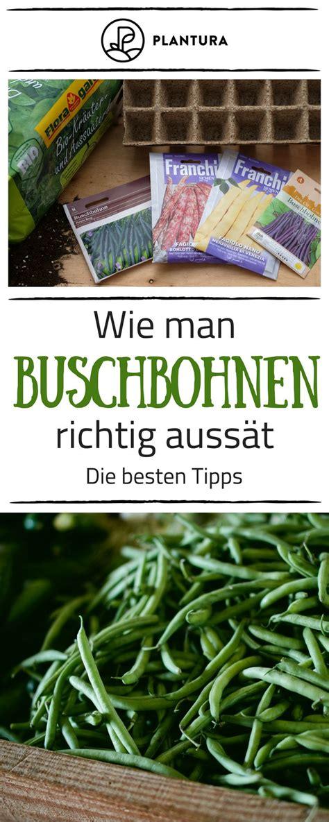 bohnen anbauen anleitung bohnen pflanzen anleitung zum anbauen bohnen tipps tricks bohnen pflanzen garten