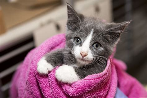 Kitten Images Aspca Kitten Nursery Caring For Neonatal Cats Images Of