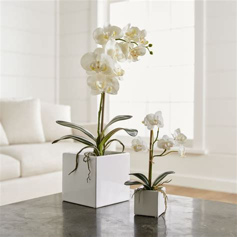 Faux Orchids   Crate and Barrel