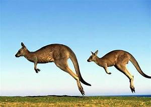 Wallaby Habitat Pictures On Animal Picture Society