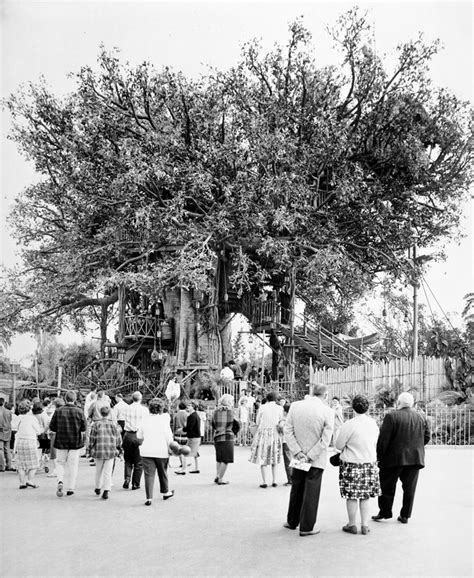 today  disney history swiss family tree house opens  disneyland park disney parks blog
