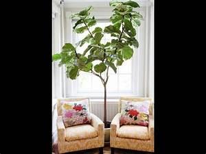 DIY Home Decoration - Fiddle Leaf Fig Tree - Beautiful