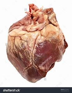 real human hearts - Google Search | Reference: Human Heart ...