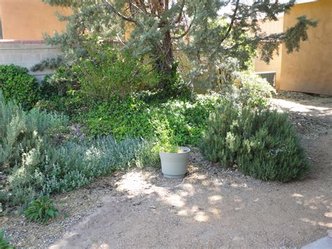 what is xeriscape landscaping xeriscape water sipping landscaping of the south west