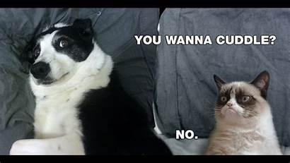 Cat Meme Grumpy Desktop Cuddle Cuddles Computer