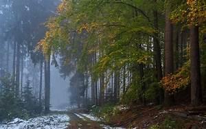 Nature, Landscape, Forest, Fall, Mist, Snow, Path, Dirt