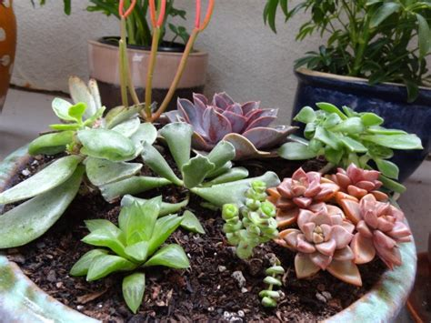 succulents shade the best outdoor plants for shaded areas