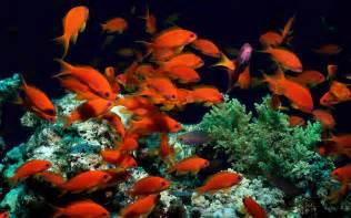 Backgrounds for Desktop Ocean with Fish