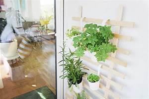 Rankhilfe Für Zimmerpflanzen : die besten zimmerpflanzen f r die wohnung bonny und kleid ~ Yasmunasinghe.com Haus und Dekorationen