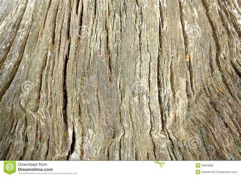 vieux tronc d arbre 233 norme comme fond image libre de droits image 33819286