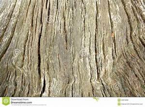 Achat Tronc Arbre Decoratif : vieux tronc d 39 arbre norme comme fond image libre de ~ Zukunftsfamilie.com Idées de Décoration