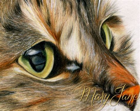 colour pencil animal drawings art gallery
