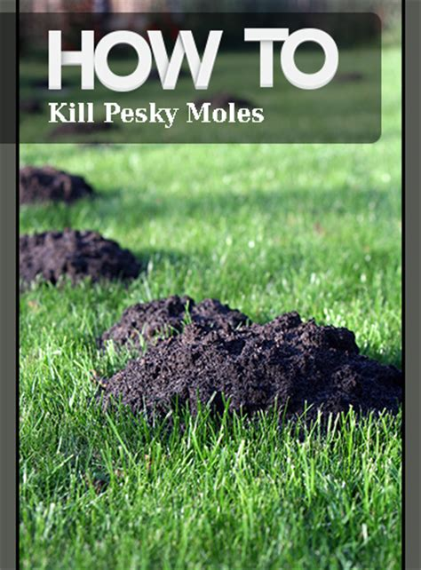 how to kill a mole how to kill pesky moles page 7 of 10 bless my weeds