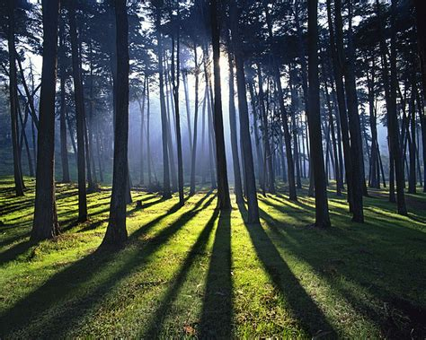 healing anaya the long light of spring