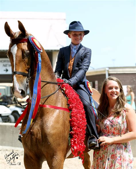 horse horses hackney equestrian championship louisville trot road ky ponies saddlebred saddlebreds hall freedom into communications est aug department am