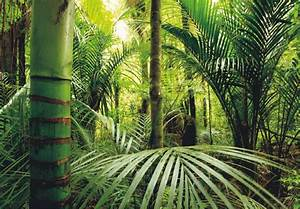 Xxl fototapeten tapete dschungel tropen bambus natur for Balkon teppich mit tapeten dschungel motiv