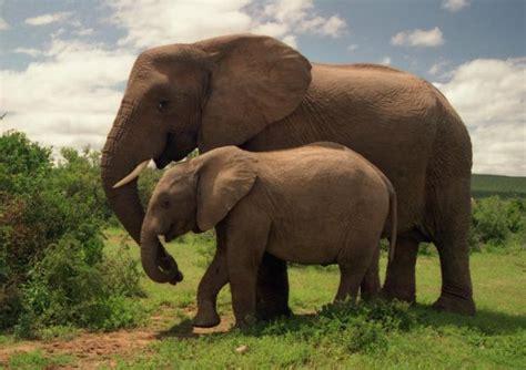 dos mamiferos em risco de extincao mundo dos animais