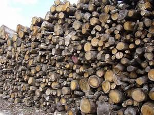 1 Stere De Bois Poids : 2 m st re ch ne livraison inclus ~ Dailycaller-alerts.com Idées de Décoration