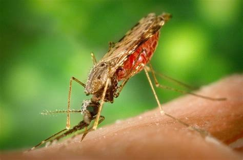 repel mosquitoes in yard 3 insect repelling perennial plants for your garden or patio