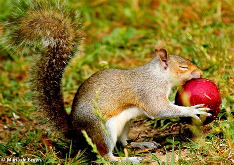 squirrels love fruit my beautiful world
