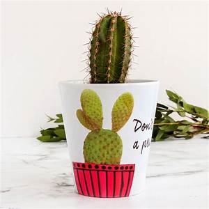 personalised cactus plant pot by snapdragon ...