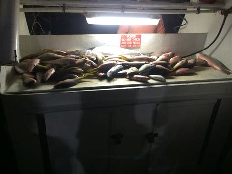 groupers grouper lauderdale biting ft season open snappers nice night bunch anchor caught trip