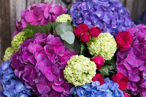 flowers in season seasonal flowers september the rose shed
