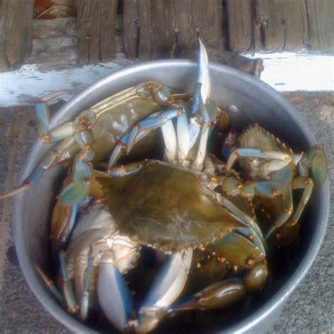 Blue Crabs South Carolina