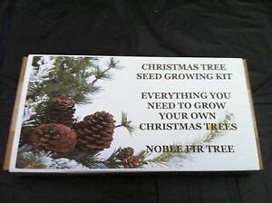 grow your own tree kit tree growing kit grow your own trees noble fir tree ebay