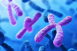 A New Study Revealed Sequencing All 24 Human Chromosomes